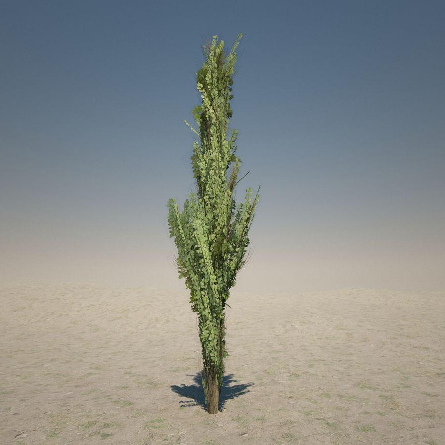 Drzewo cyprysowe royalty-free 3d model - Preview no. 7