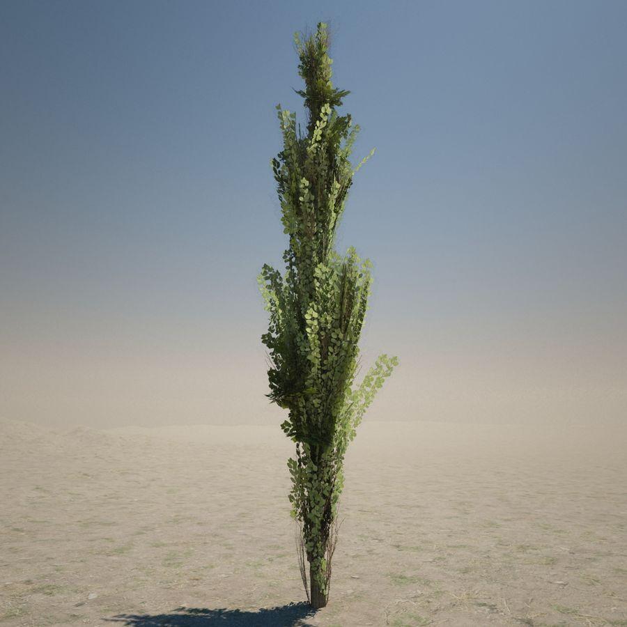 Drzewo cyprysowe royalty-free 3d model - Preview no. 3
