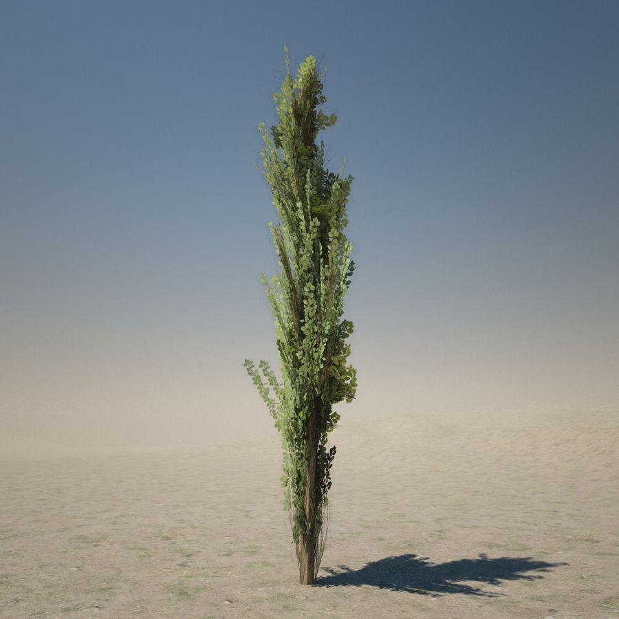 Drzewo cyprysowe royalty-free 3d model - Preview no. 9