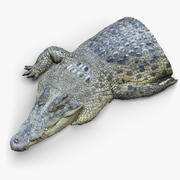 Varredura 3D de fragmentos de crocodilo 3d model