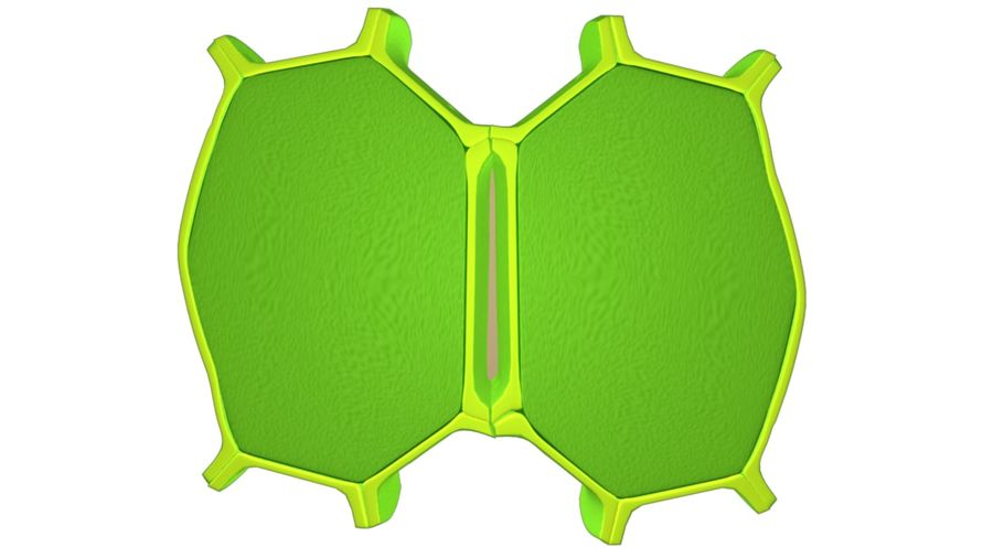 Cell wall royalty-free 3d model - Preview no. 2