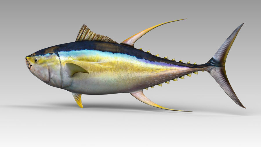 Tuna royalty-free 3d model - Preview no. 4