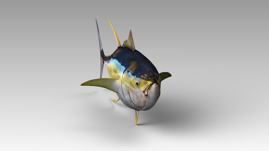Tuna royalty-free 3d model - Preview no. 5