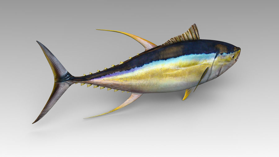 Tuna royalty-free 3d model - Preview no. 6