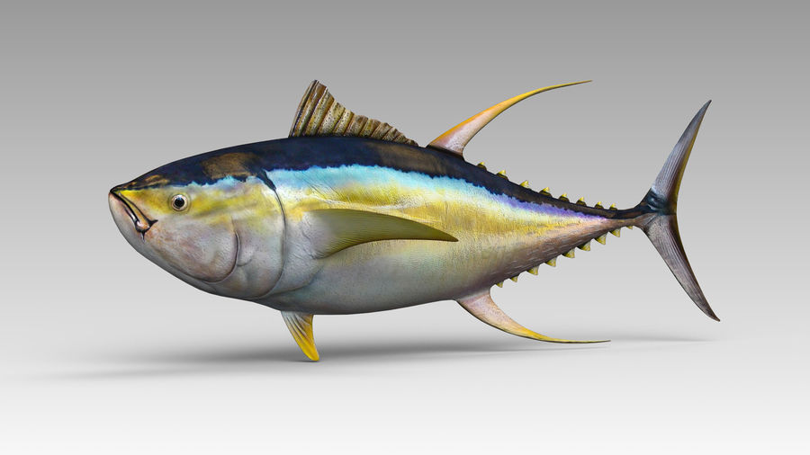Tuna royalty-free 3d model - Preview no. 3