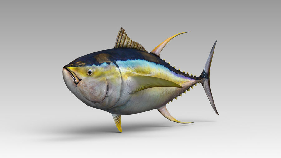 Tuna royalty-free 3d model - Preview no. 2