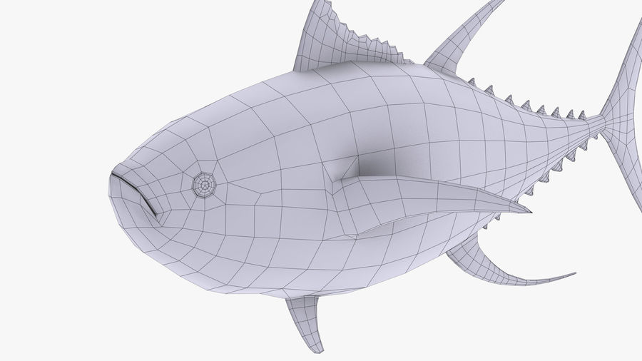 Tuna royalty-free 3d model - Preview no. 12