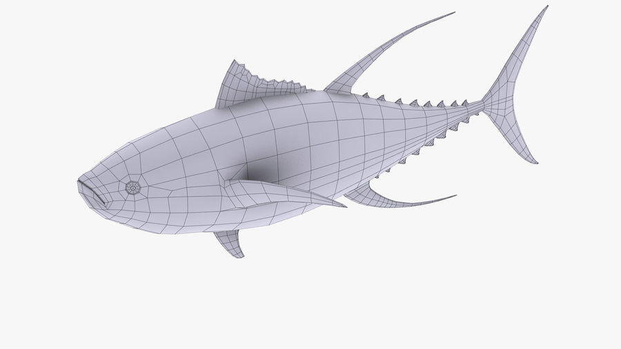 Tuna royalty-free 3d model - Preview no. 11
