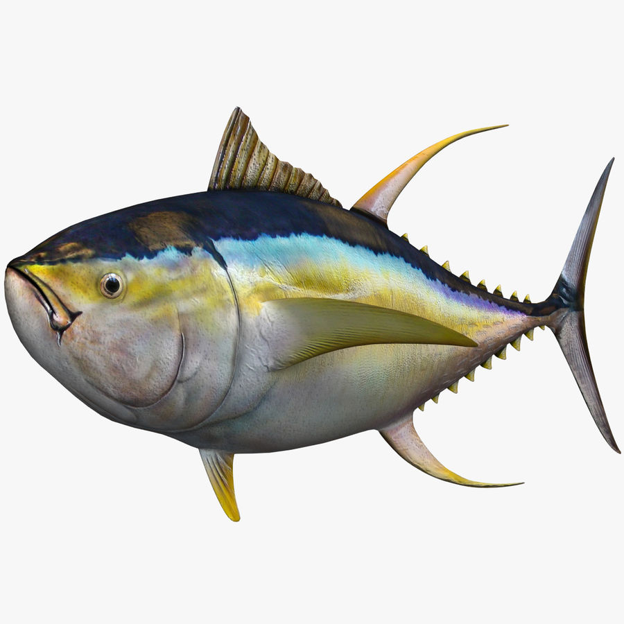 Tuna royalty-free 3d model - Preview no. 1