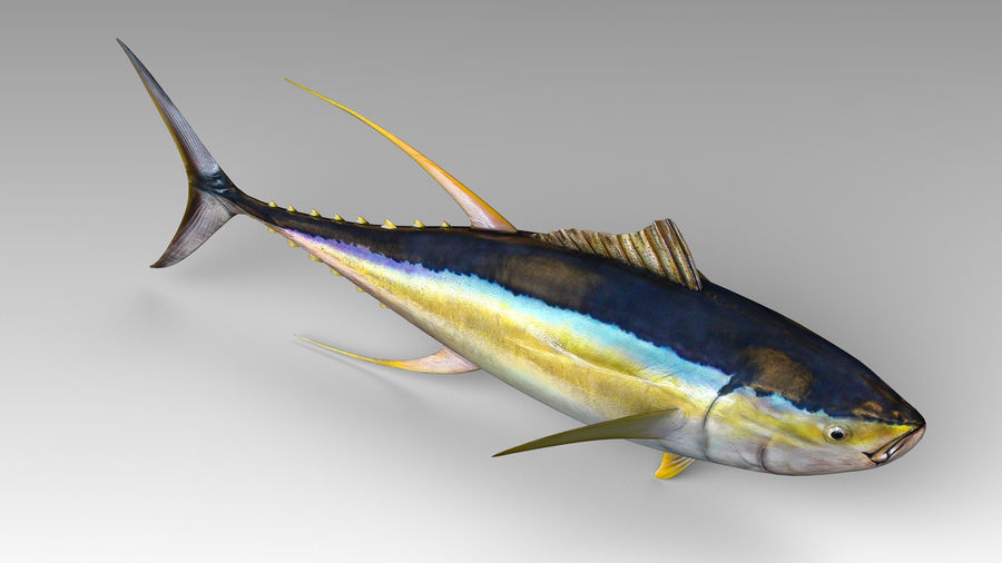 Tuna royalty-free 3d model - Preview no. 7