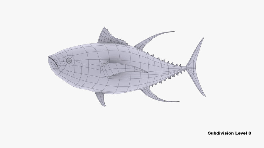Tuna royalty-free 3d model - Preview no. 9