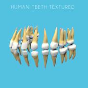 人的牙齿纹理 3d model
