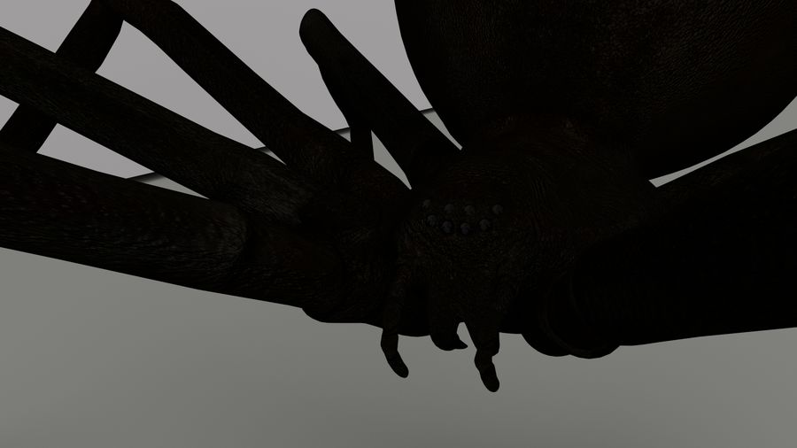 Black Widow Spider royalty-free 3d model - Preview no. 9