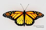 Motyl monarcha 3d model