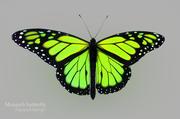 Grön fjäril 3d model