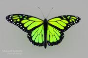 Grüner Schmetterling 3d model