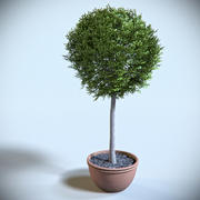 Arbuste Décoratif 02 3d model