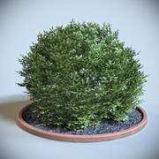 Arbuste Décoratif 03 3d model