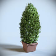 Arbuste Décoratif 01 3d model