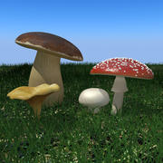 3d Mushrooms collection 3d model
