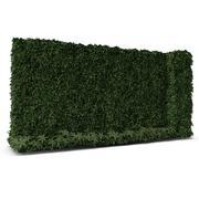 Grüne Efeuwand 3d model