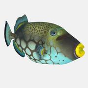 小丑引金鱼 3d model