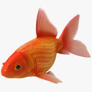 Japon balığı 3 3d model