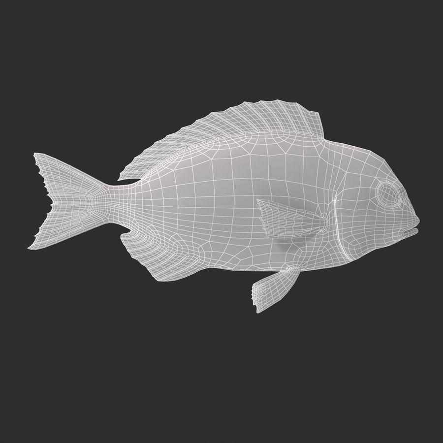 Peixe Dourada royalty-free 3d model - Preview no. 14