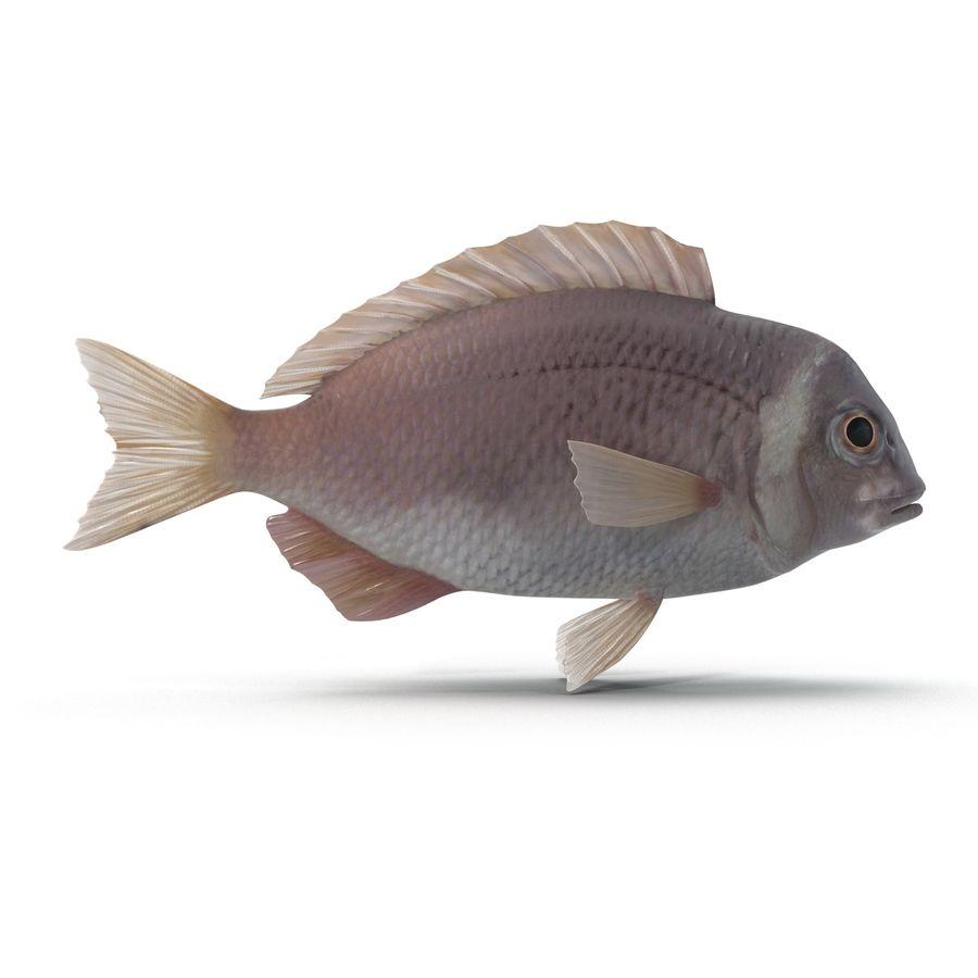 Peixe Dourada royalty-free 3d model - Preview no. 7