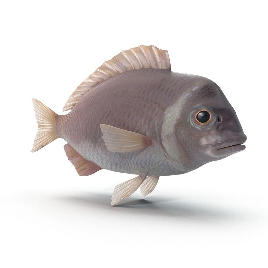 Peixe Dourada royalty-free 3d model - Preview no. 2