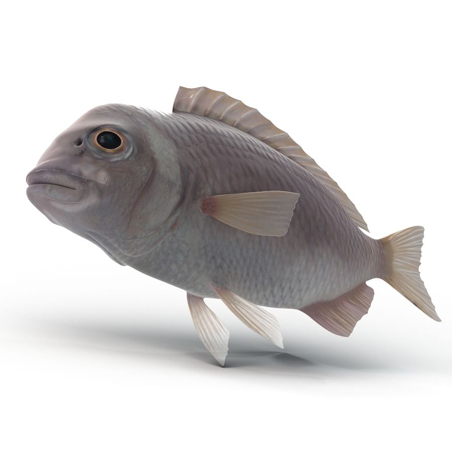 Peixe Dourada royalty-free 3d model - Preview no. 1