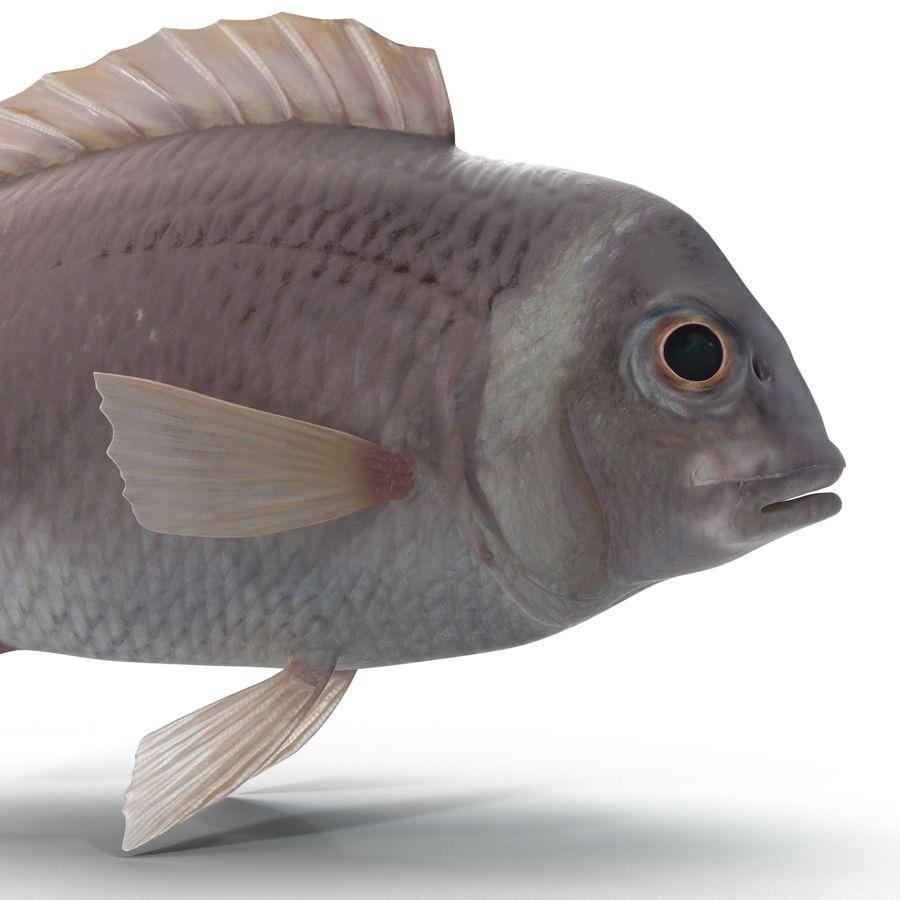 Peixe Dourada royalty-free 3d model - Preview no. 9