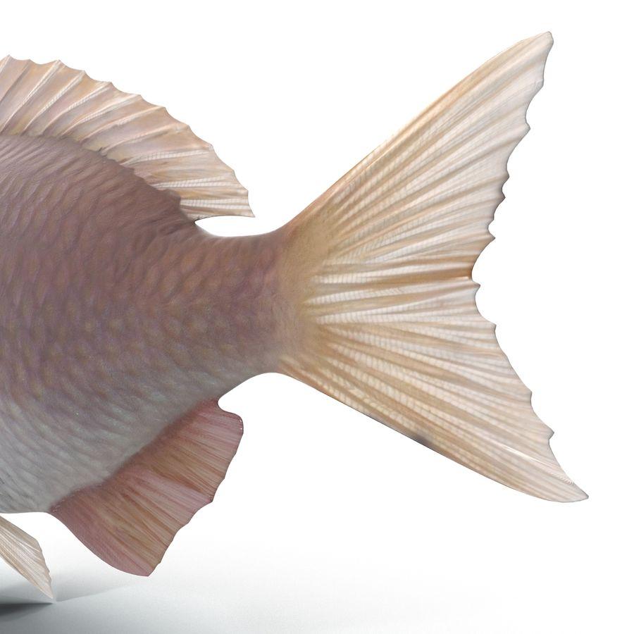 Peixe Dourada royalty-free 3d model - Preview no. 11