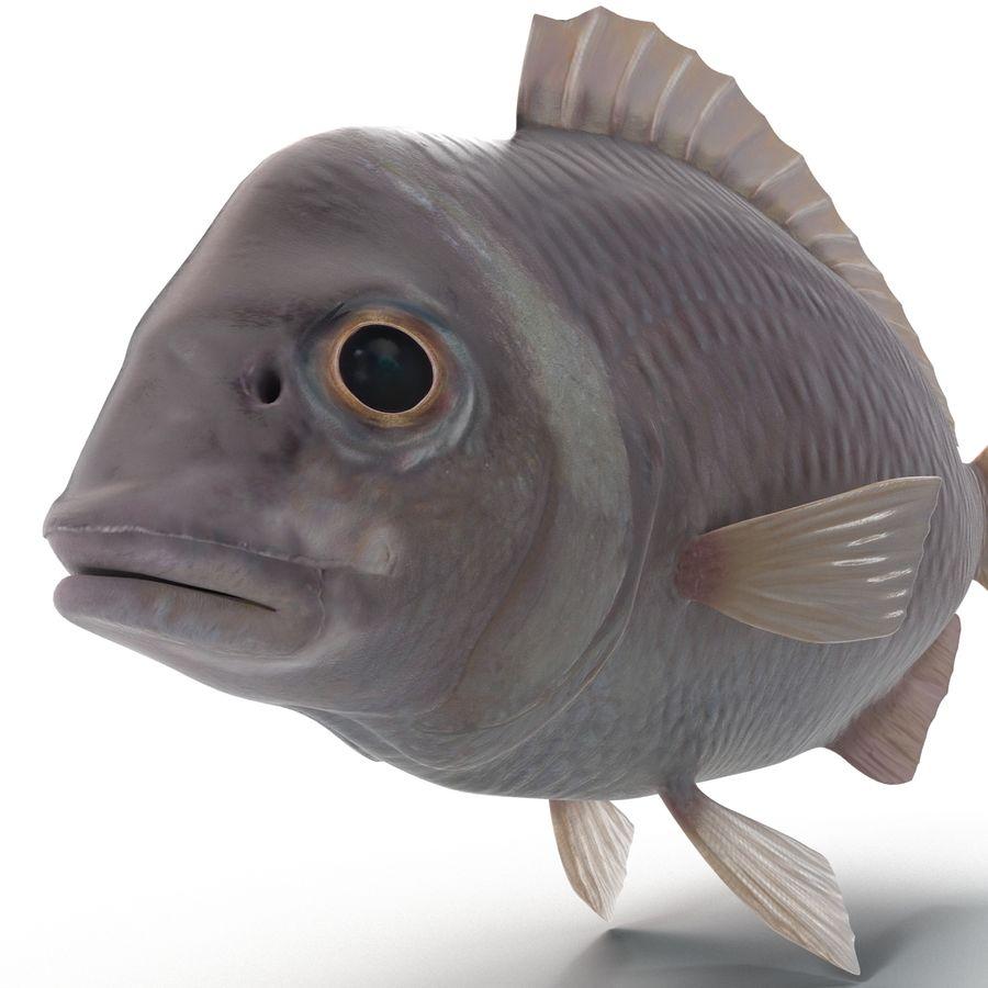 Peixe Dourada royalty-free 3d model - Preview no. 10
