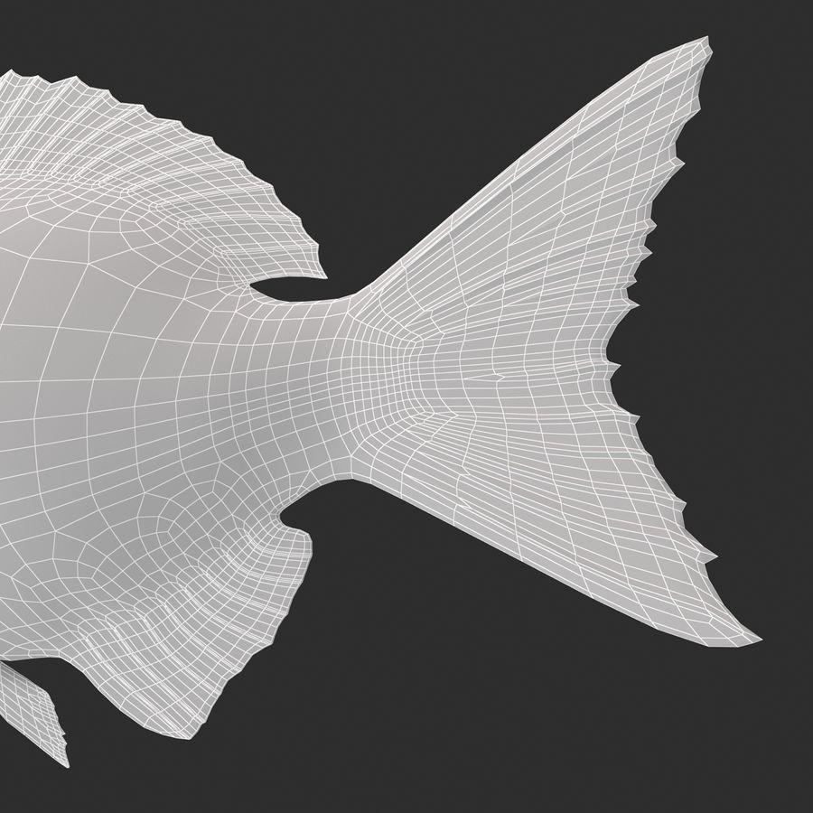 Peixe Dourada royalty-free 3d model - Preview no. 17