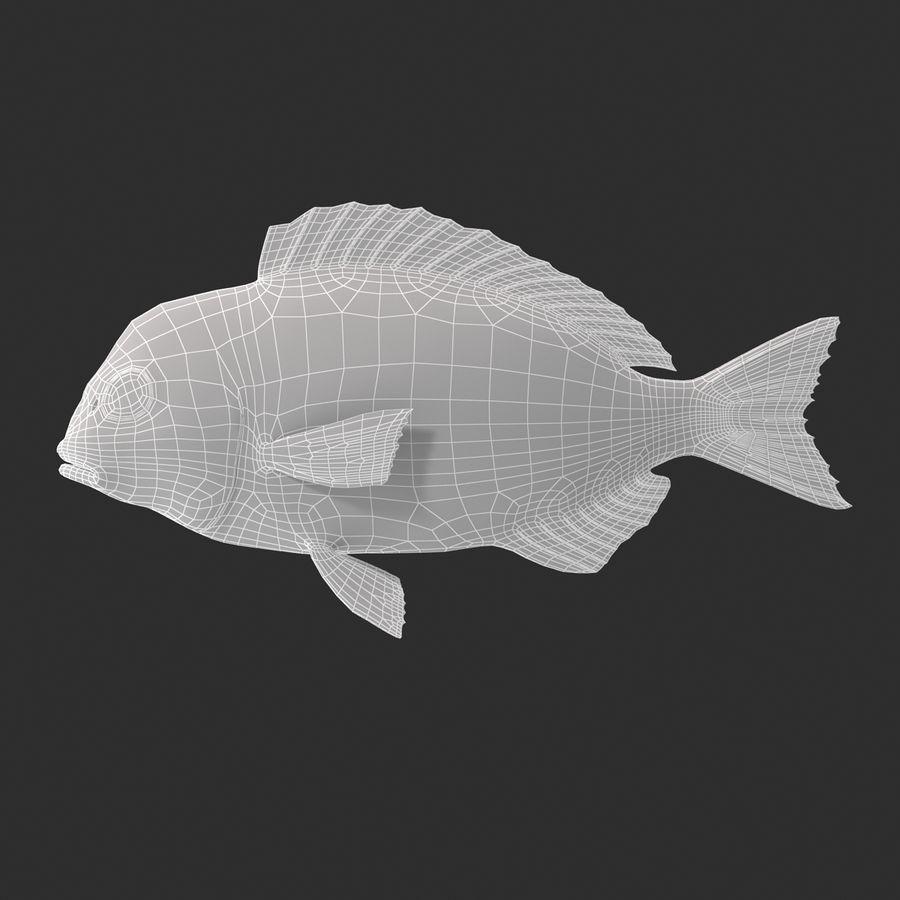Peixe Dourada royalty-free 3d model - Preview no. 13