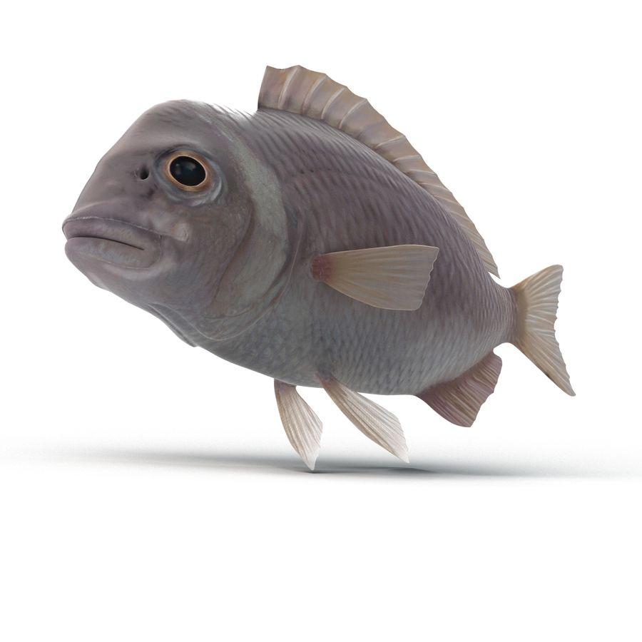 Peixe Dourada royalty-free 3d model - Preview no. 5