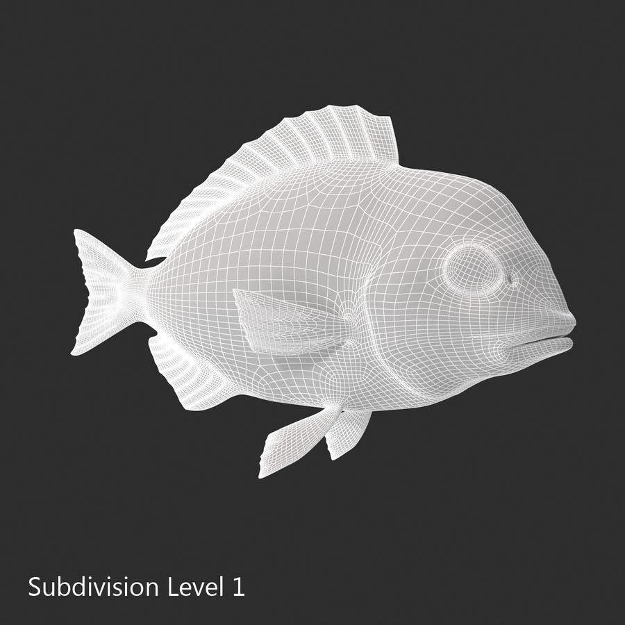 Peixe Dourada royalty-free 3d model - Preview no. 19