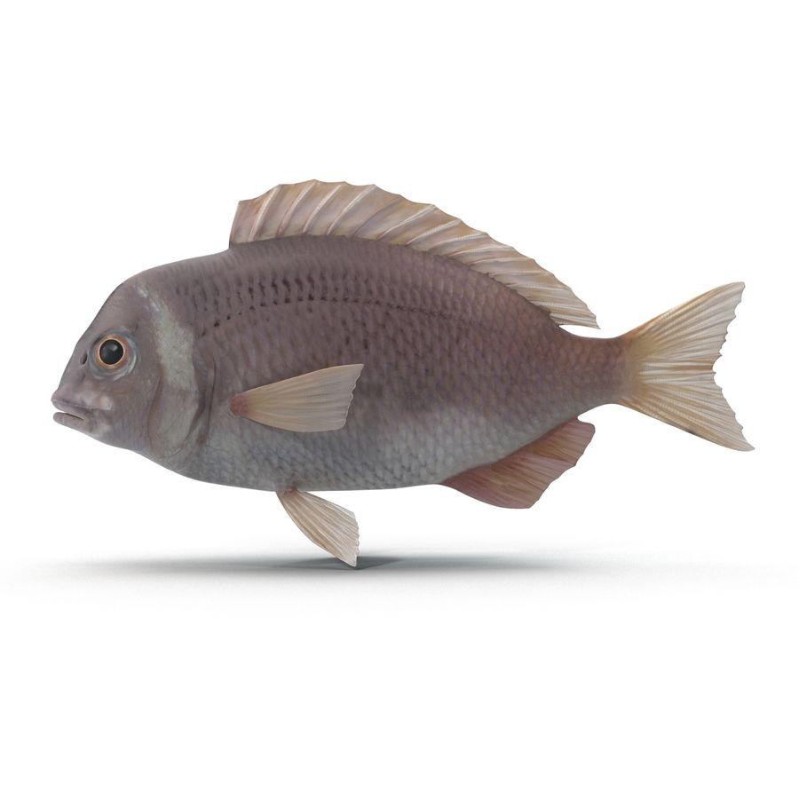 Peixe Dourada royalty-free 3d model - Preview no. 6