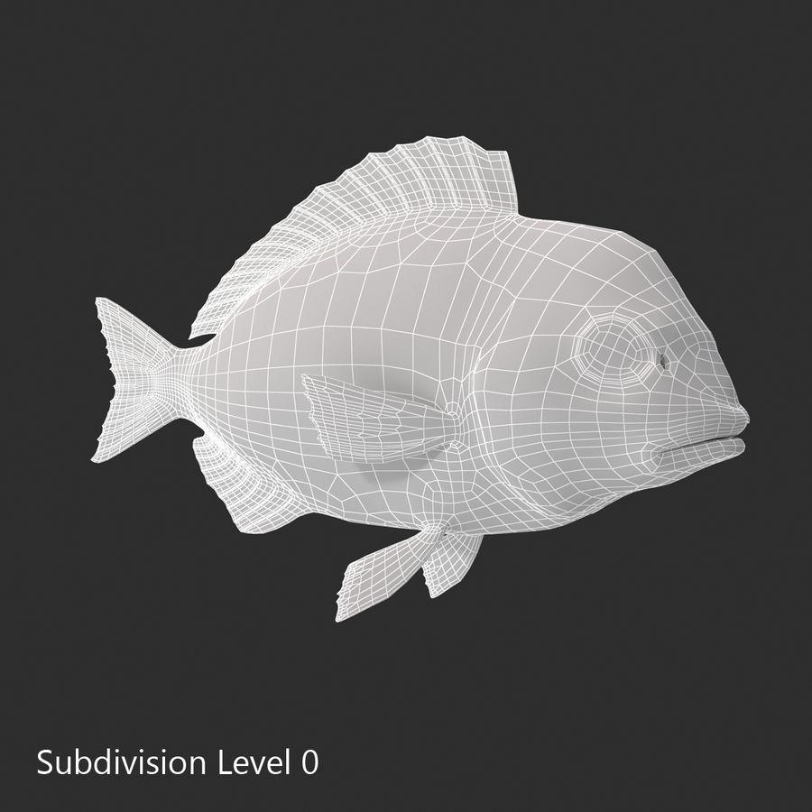 Peixe Dourada royalty-free 3d model - Preview no. 18