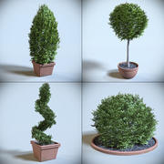 Kolekcja dekoracyjnych krzewów 3d model