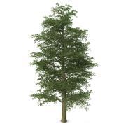 Árvore de faia europeia 3d model
