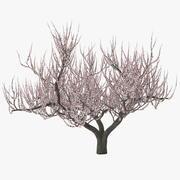 Apricot Tree in Bloom 3d model