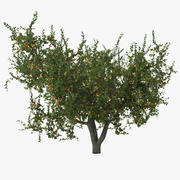 Apricot Tree 3d model