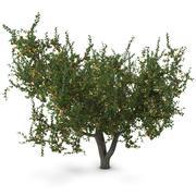 살구 나무 3d model