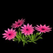 pink_flower 3d model