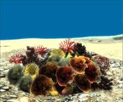 Pacchetto di coralli 3d model