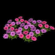 fleur de jardin 3d model