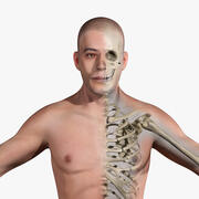 Human Anatomy Skeletal Systems (Male) 3d model