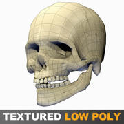 Human Skull textured low polygons 3d model